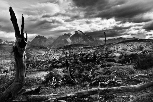 Patagonia_padure dupa incendiu Laguna Azul