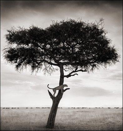 Nick Brandt Africa