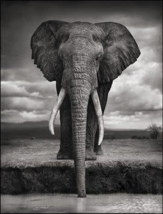 Nick Brandt Africa 05