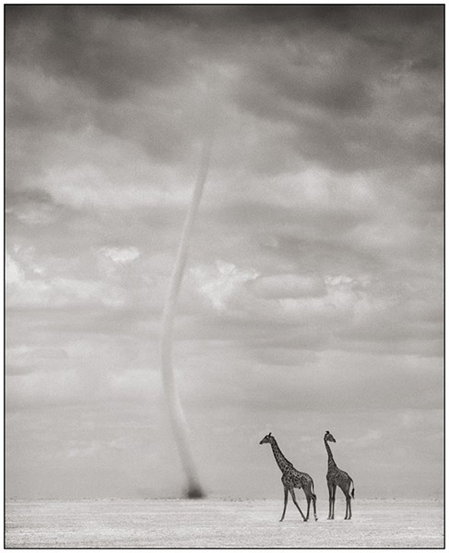 Nick Brandt Africa 141