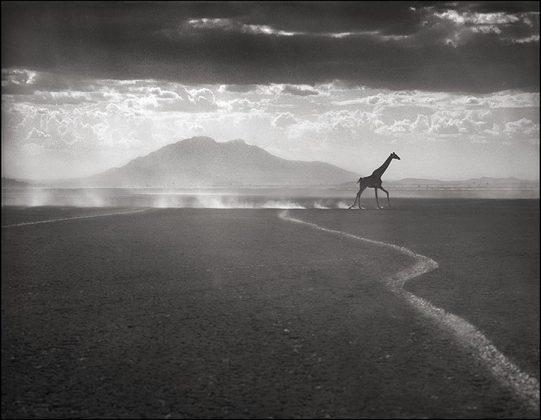 Nick Brandt Africa 251